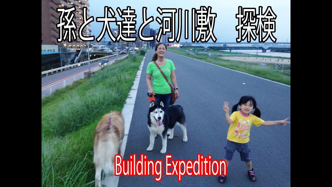 建物探訪 荒川河川敷 孫娘とハスキー犬達と探索 Building Expedition