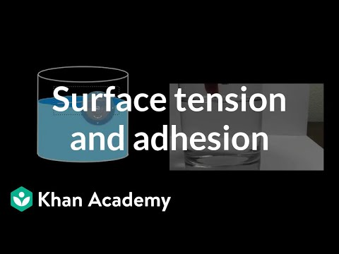 Surface Tension and Adhesion | Fluids | Physics | Khan Academy