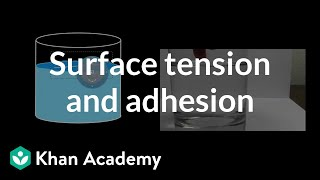 Surface Tension and Adhesion