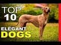 Top 10 Elegant Dog Breeds