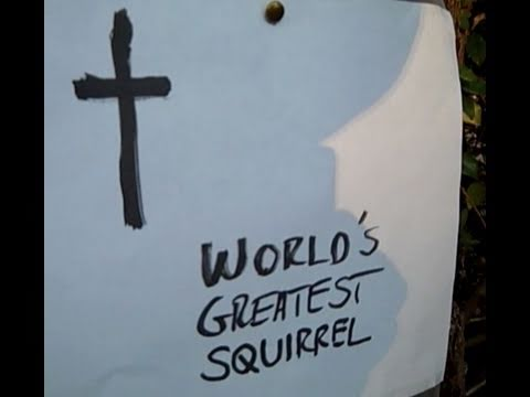 Squirrel Funeral For The World's Greatest Squirrel - Be Kind To Animals