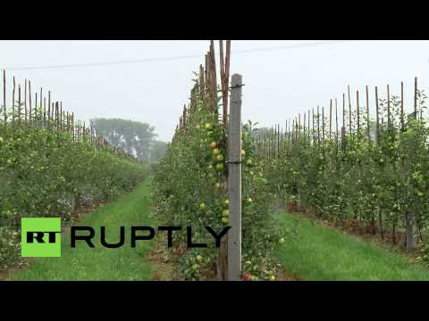 Poland: Apple farmers worry over Russian food embargo