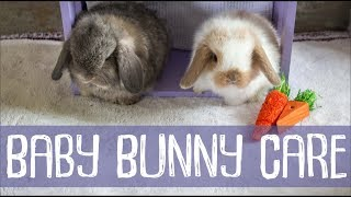 Bunny Update - 4 Weeks Old + Baby Bunny Care