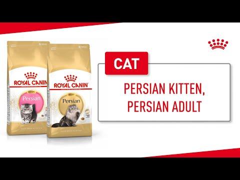 Persian Kitten, Persian Adult