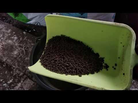 Плавающий или тонущий корм для форели. Какой корм выбрать для выращивания форели в садках