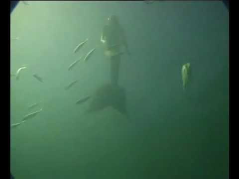 Черное море ::: Флора и фауна подводных скал Черного моря