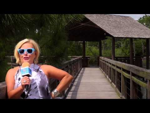 The Beach Show 179 - Panama City Beach, Florida Real Estate