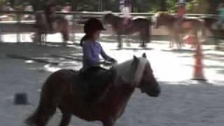 faire du poney en été