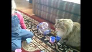kitty tea party Thumbnail