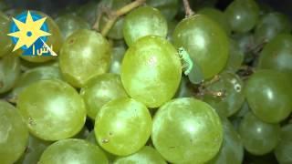 بالفيديو ذبابة الفاكهة عن قرب خلال ظهورها فى درجات الحرارة المرتفعة