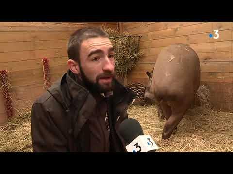 Port Saint-Père : Planète Sauvage célèbre la première naissance d'un tapir au parc