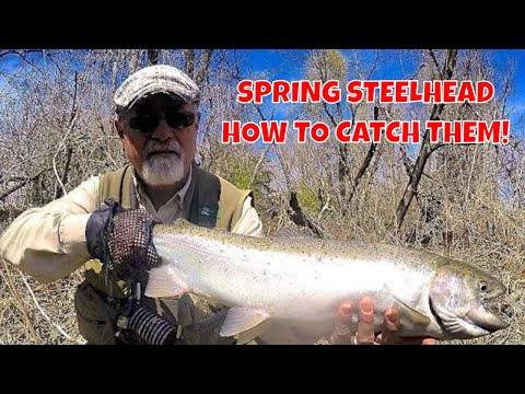 Spring Steelhead | Credit River