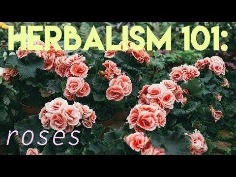 herbalism: rose medicine // DIY ROSE WATER TONER IN 10 MINUTES
