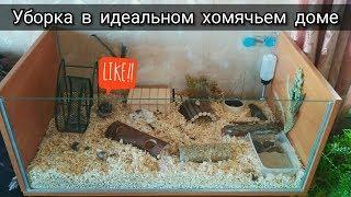 Уборка в клетке у хомяка // Пуся попрыгунья-стрекоза