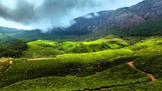 Tea plantations timelapse. Munnar, Kerala, India