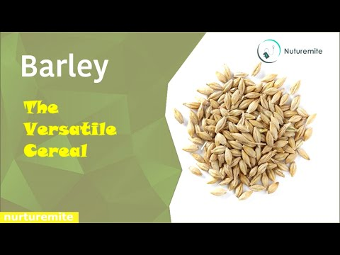 Barley health benefits,side effects and fun facts you probably never knew-Nuturemite English