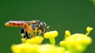 minha colmeia de abelhas jatai recm adquirida