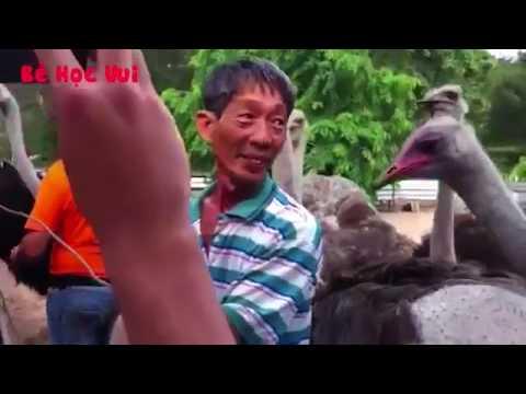 Amazing ostrich lay eggs in the zoo    B C3 A9 H E1 BB 8Dc Vui