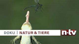 """Trailer n-tv Doku """"National Geographic-Dokumentationen"""" bei n-tv und online bei TV NOW"""