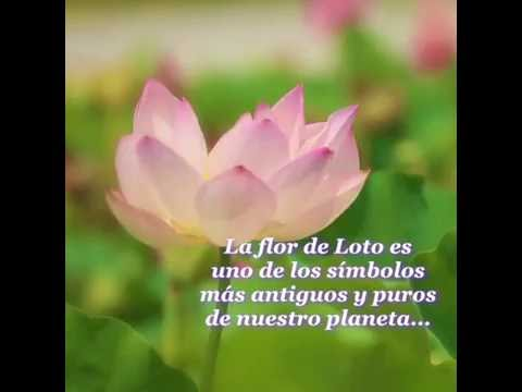 La Flor De Loto Youtube