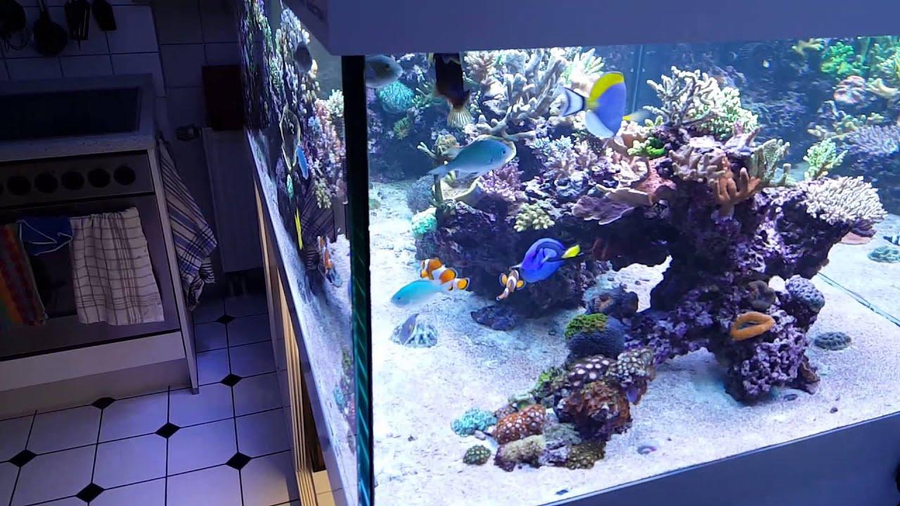 My Kitchen Living Room Reef Tank Meerwasser Aquarium Korallen   YouTube