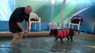 Rummy's Beach Club - Warm Water Dog Swimming