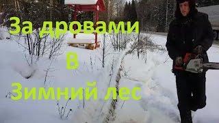 За дровами    Обзор местности