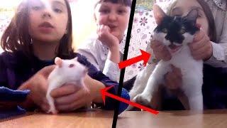 ШОК КОНТЕНТ: Бедные животные. Детишки жестоки (ШБэ 138)