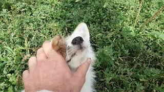 енотовидная собака и два лисьих подростка