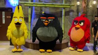 Angry Birds Dance Battle with Bomb at Angry Birds World in 4K