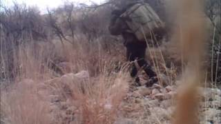 16 drug smugglers, 30 miles north of the border near Tucson AZ - AZ Border Defenders