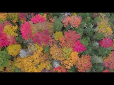 White Mountains Foliage New Hampshire Drone Aerial 4K