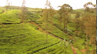 Ella Nuwara ELiya  Adam s Peak Journey By train , Tea plantation Sri lanka