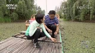 [远方的家]行走青山绿水间 走进邛海国家湿地公园| CCTV中文国际