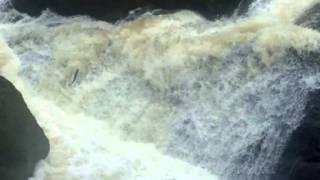 Salmon Leaping The Falls of Feugh