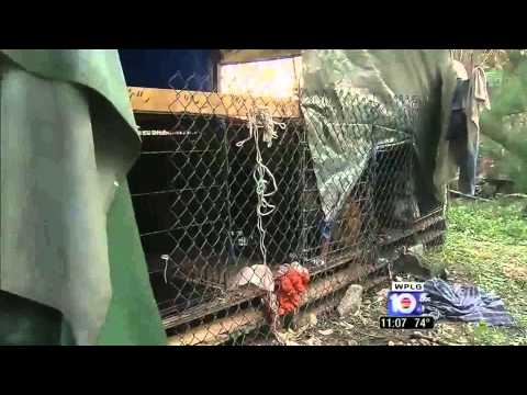 ABC News....11 caged dogs discovered