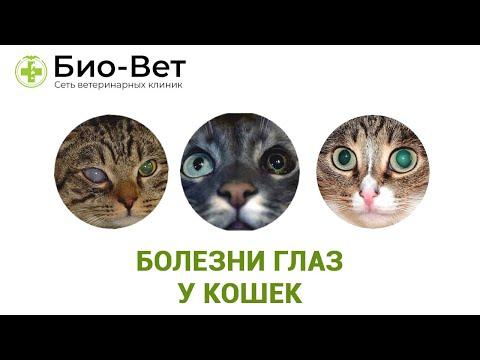 Болезни Глаз У Кошек& Причины Болезней Глаз У Кошек. Ветклиника Био-Вет