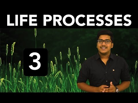 Biology: Life Processes (Part 3)
