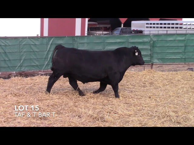 T Bar T and Taliaferro Angus Lot 15