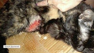 UTV. В Оренбурге ветеринар калечит домашних животных
