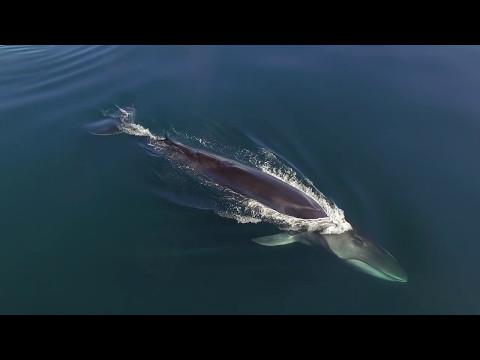 Sea Shepherd Wildlife - Ep 05 - Fin Whales