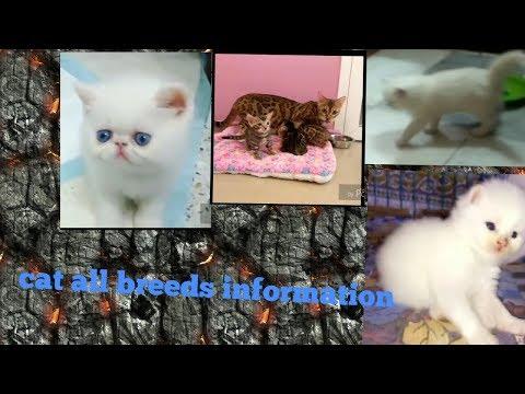 cat kitten all breeds information vlog hindi