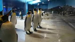 長崎ペンギン水族館にて.