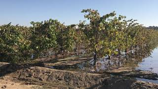 North San Joaquin Valley Water Conservation District groundwater recharge project