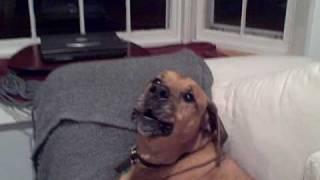 RIP Coopy--dog howls at fire truck siren - hillarious