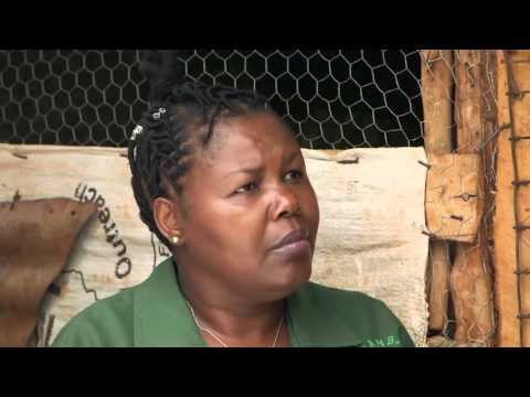 Shamba Shape Up Sn 05 - Ep 24 Chicken, Post Harvest Losses,