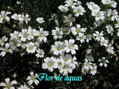 Las Flores Nombre Y Su Significado Youtube