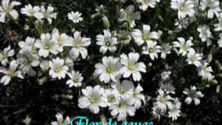 Las flores, nombre y su significado