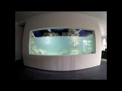 Aquarium 13 000L (construction)