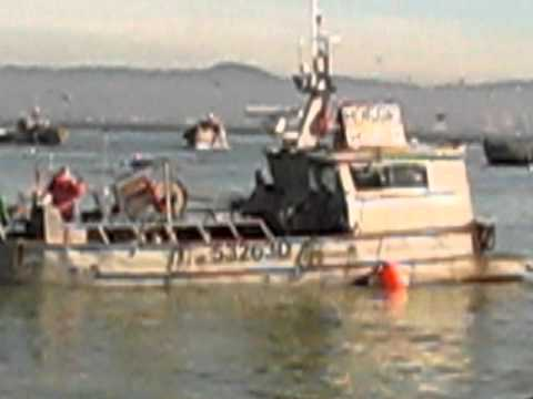 Unusually Large Massive FishKill in McCovey Cove, SF, CA